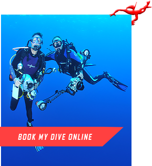BOOK MY DIVE